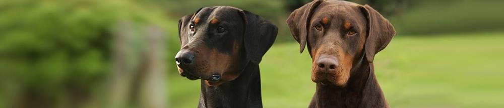 Affinity Canine Massage