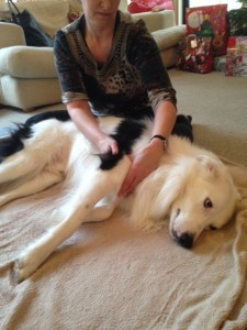 border-collie-canine-massage